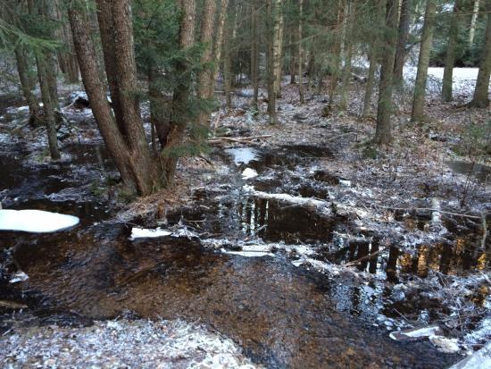 Finlandia meridionale, Finlandia: bevroren moeras