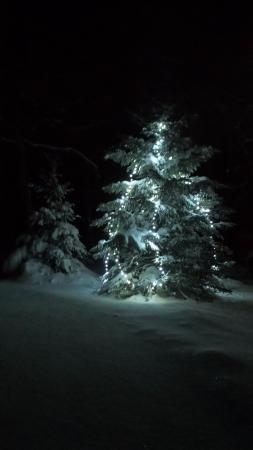 Scotsburn, Kanada: Decorated tree near the chalets