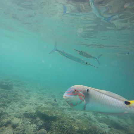 Blue Lagoon Beach Resort: Snorkelling off Blue Lagoon