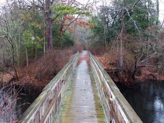 Parvin State Park: Long Bridge