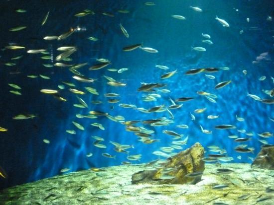 Poissons Picture Of Aquarium La Rochelle La Rochelle