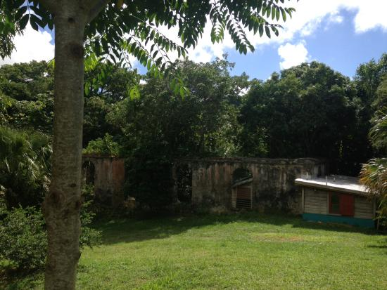 Mount Victory Camp: The grounds include mango trees, herbs and free range chickens.