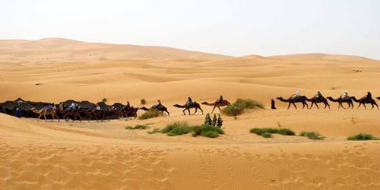 Desert Stars tours