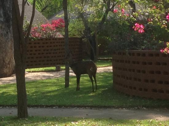 Mala Mala Private Game Reserve, Sudáfrica: Visitors in the grounds