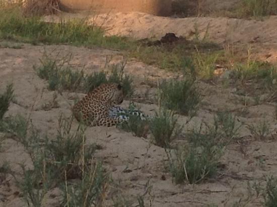 Mala Mala Private Game Reserve, Sudáfrica: Beautiful leopard