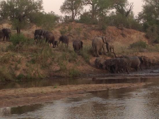 Mala Mala Private Game Reserve, Sudáfrica: On safari