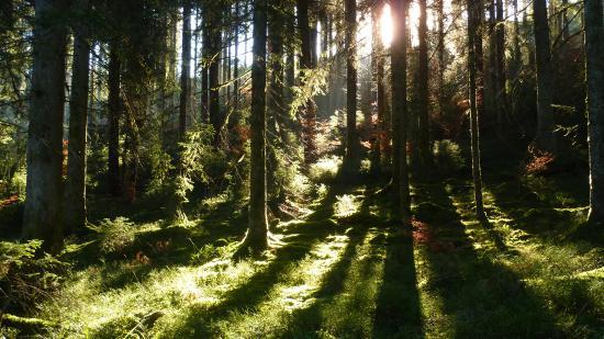 Wellnesshotel Tanne: Impressionen aus dem Tonbach-Tal
