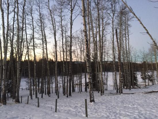 Sundre, Kanada: photo3.jpg