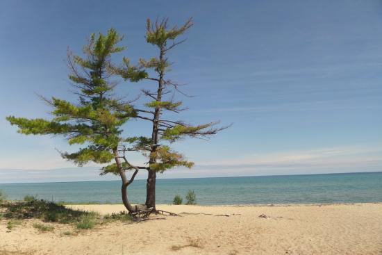 Carp Lake, MI: swim area