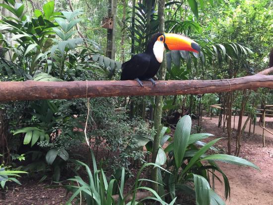 Secret Garden Iguazu B&B: photo6.jpg