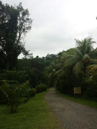 Samasati Retreat & Rainforest Sanctuary: IMG_20151231_150711_large.jpg