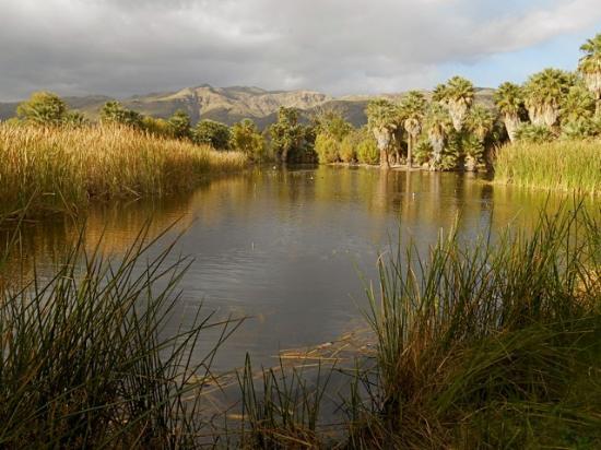 Pond At Agua Caliente Picture Of Agua Caliente Park Tucson Tripadvisor