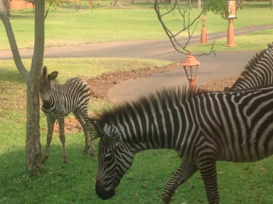 AVANI Victoria Falls Resort: Mum and baby view from room