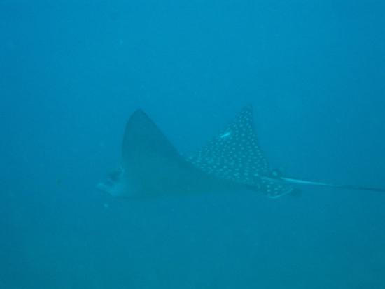 Κόλπος Simpson (Λιμνοθάλασσα), Άγιος Μαρτίνος: Dive Safaris