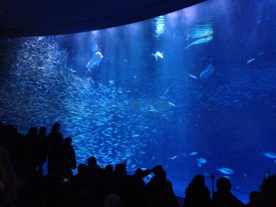 ... - Picture of Port of Nagoya Public Aquarium, Nagoya - TripAdvisor