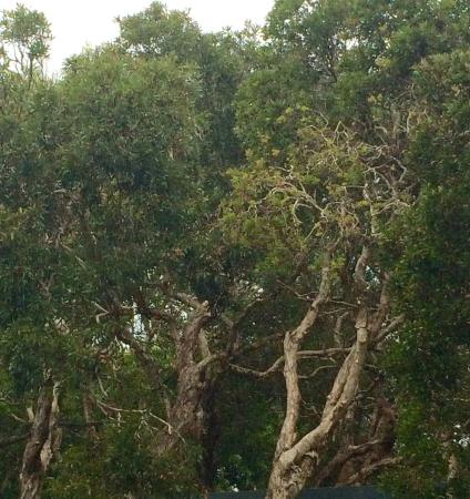 Suffolk Park, Australië: photo1.jpg