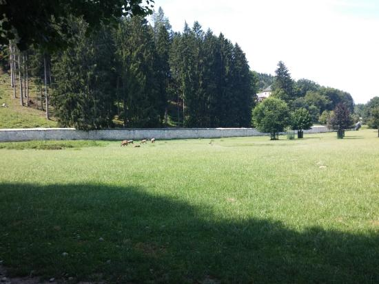 Rosegg, Αυστρία: Bambi
