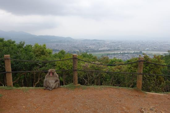 view - Picture of Monkey Park Iwatayama, Kyoto - TripAdvisor