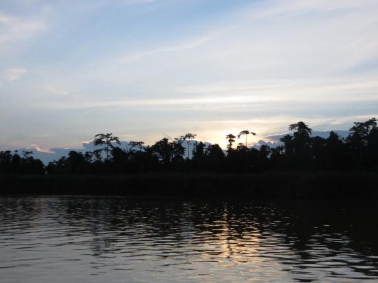 Bilit Rainforest Lodge: Tour spettacolari con avvistamento organizzati dal lodge