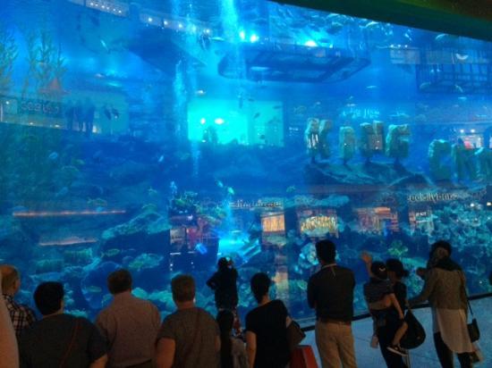 ... eau - Picture of Dubai Aquarium & Underwater Zoo, Dubai - TripAdvisor