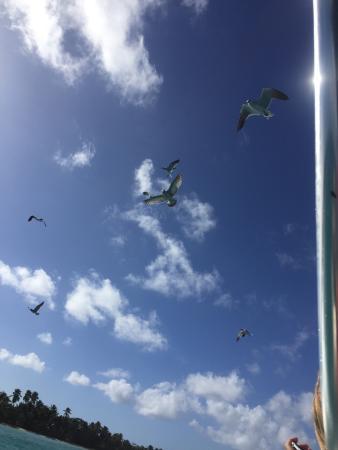 Bayahibe, جمهورية الدومينيكان: photo7.jpg