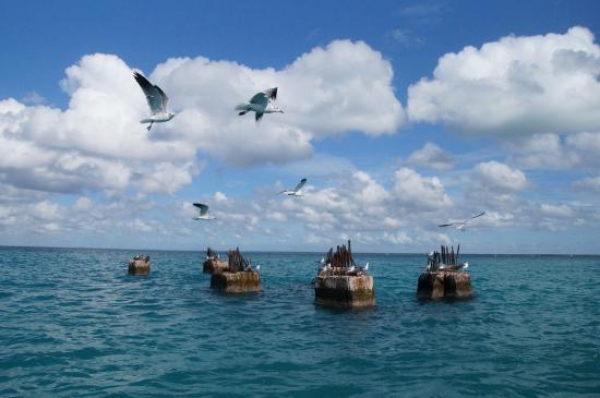 Bayahibe, جمهورية الدومينيكان: Saona
