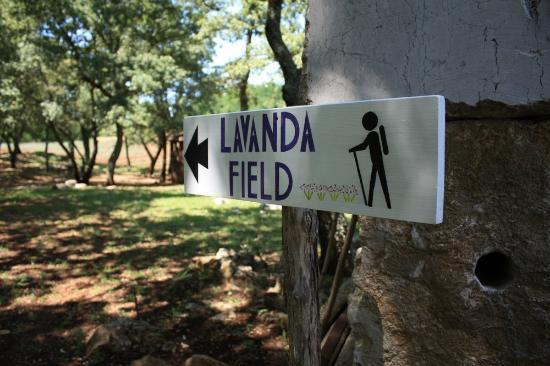 Visnjan, Croacia: Indication of lavender plantation walking