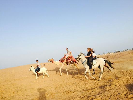عيش معنا في الهرم للستمتاع بالخيول والجمال والكرتة والبيتش باجي