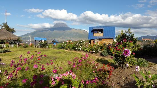 Hosteria Rose Cottage: Vista desde el Hostal. Volcan Imbabura