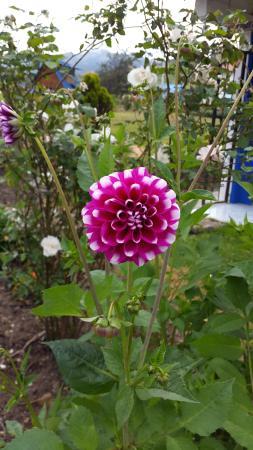 Hosteria Rose Cottage: Variedad de Flores
