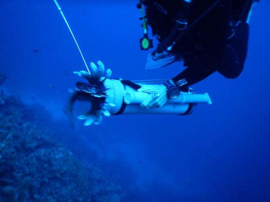 GOOOD Resort: Get the lionfish in there!