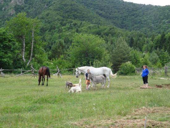 Korenica, Kroatien: Les chevaux et l'âne