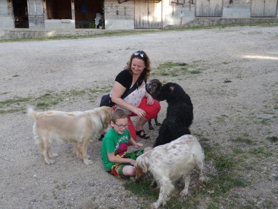 Korenica, Kroatien: Accueil des chiens du proprio