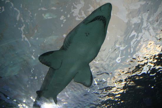 Aquafish Cma Case Solution Case Study Help - Case Solution & Analysis