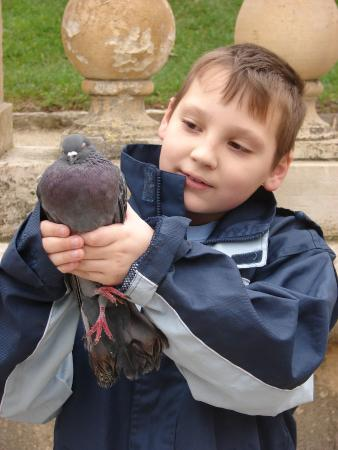 Nimes, France: Un jeune pigeon