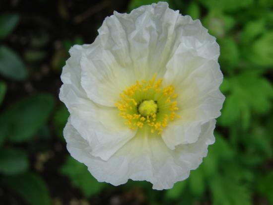 Nimes, France: Les fleurs des jardins de la Fontaine