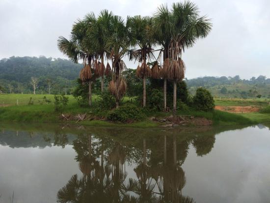 Cacaulândia Rondônia fonte: media-cdn.tripadvisor.com