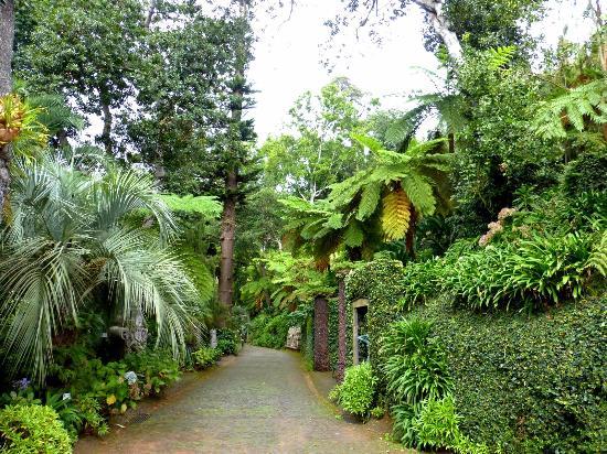 imagens de jardim tropicalMONTE Jardim Tropical – Foto de Funchal