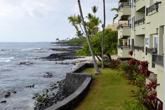 Kona Banyan Tree: This is the view from the lanai