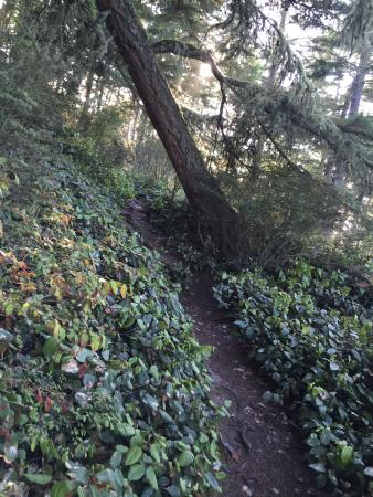 Oak Harbor, WA: Path and trees are not straight