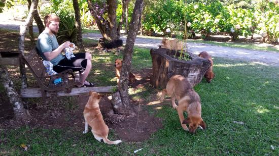 Cabinas Bella Vista : Adorable dogs on premises hanging out at lunch