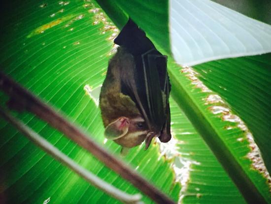 Costa Rica Jade Tours: photo3.jpg
