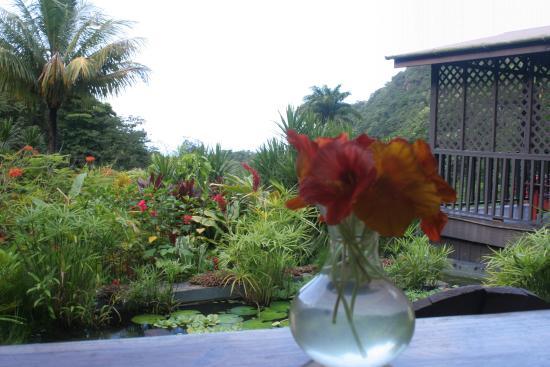 Saint Paul Parish, Dominica: Breakfast setting