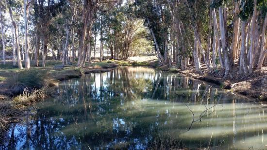 Los Osos, CA: A pond within the preserve - with ducks and geese