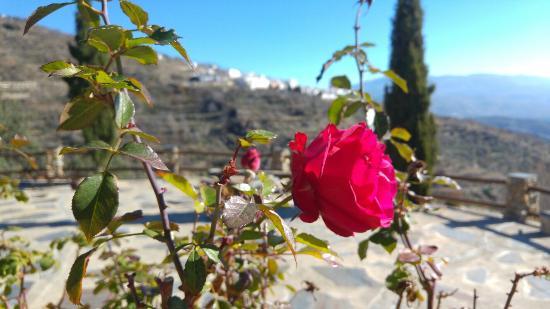 Province of Granada, Espagne : 20151230_133645_large.jpg