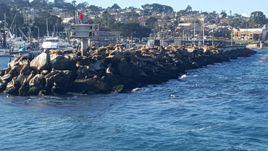 Coupons for princess monterey whale watching