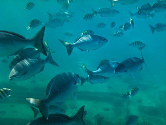 Holetown, Barbados: snorkelling & shipwreck