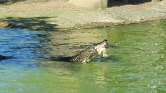 Riverbend Crocodile Farm