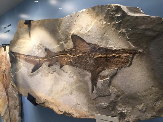 Museo dei Fossili di Bolca - Verona
