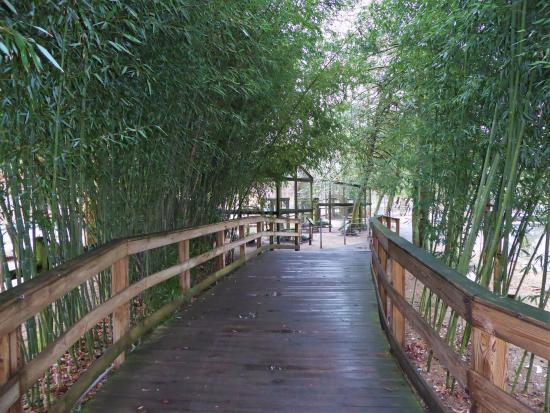 Bridgeton, Nueva Jersey: Bamboo canopy